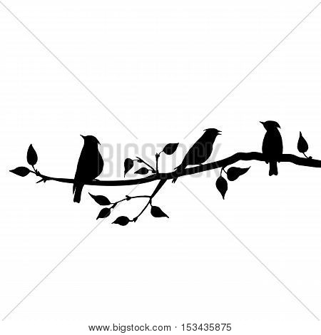 vector silhouettes of birds at tree, hand drawn waxwings at branch of wild apple tree, isolated vector element
