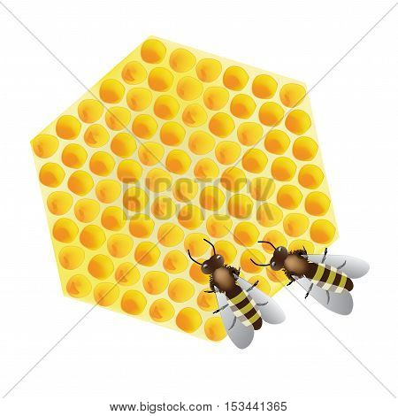 Vector - working bees on honeycomb on white background - illustration