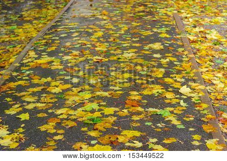 Asphalt track covered with wet fallen leaves of maple during rain