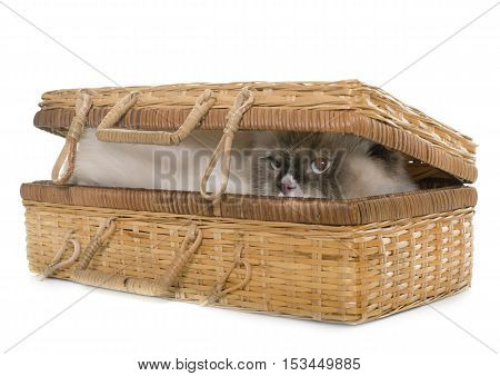 english longhair cat in basket in front of white background