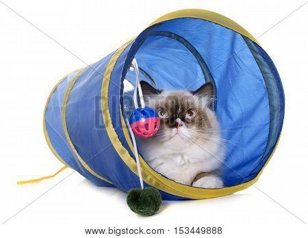 english longhair cat in tunnel in front of white background