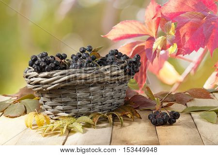Aronia (chokeberry) in a wicker basket on a wooden table on a background of red and green leaves