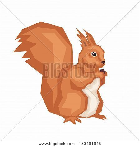 the squirrel gnaws nut. wild forest animal