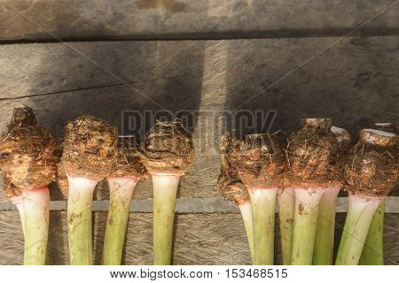 yam or keladi root crop on table with copy space at top for background.