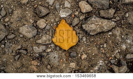 Yellow leaf on the ground, autumn, colors of autumn, fall, autumn pattern, autumn background, yellow leaves, autumn texture, fall back, autumn back, hello autumn grunge autumn background, grunge leaf