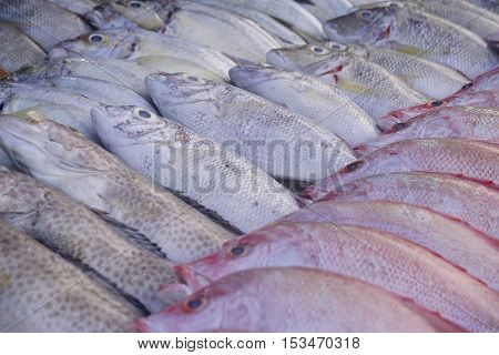 Close up of a variety of fresh seafood on display at fish market.