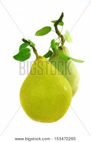 ant on a yellow pear isolated on white, studio shot