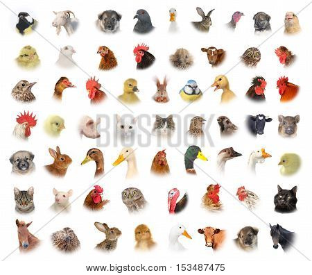 isolated portraits of animals and birds on white