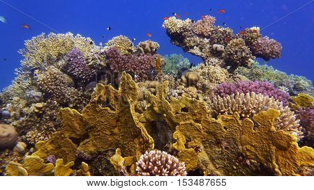 Beautiful healthy coral reef colorful in its diversity