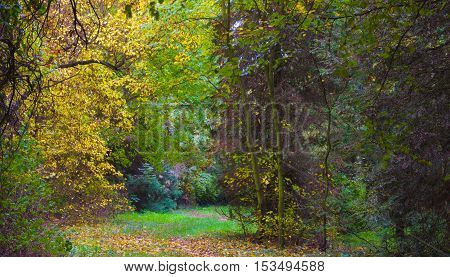 Changing colors. Autumn season landscape. Fallen yellow leaves and a path in the forest. The place is an arboretum in Tiszalok, Hungary. Wet chilly weather.