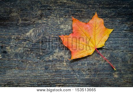 Autumn background with orange fall maple leaf on rustic wooden table with place for text. Thanksgiving autumn holidays background concept. Orange and red autumn leaves. Copy space. Top view.