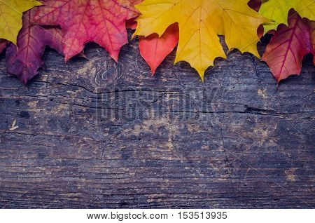 Autumn background with colorful fall maple leaves on rustic wooden table with place for text. Thanksgiving autumn holidays background concept. Banner with autumn leaves. Copy space. Top view.