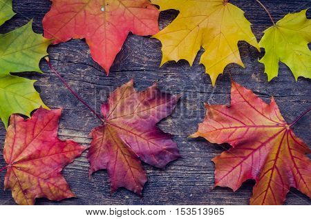 Autumn background with colorful fall maple leaves on rustic wooden table. Thanksgiving autumn holidays background concept. Yellow and orange autumn leaves. Top view.