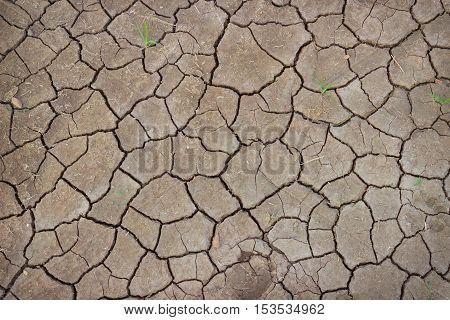 Soil cracked by the scorching sun. Background