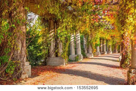 Pergola - concrete archway passage in the garden, surrounded by climbing plants. Wroclaw Poland in autumn. Beautiful tunnel walkway in park.