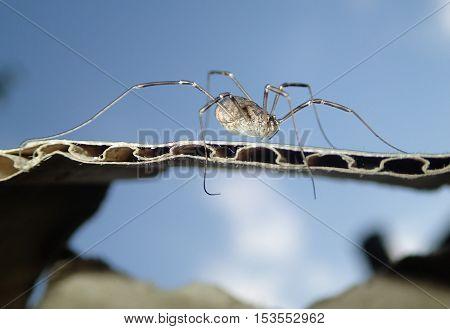Arachnid on a cardboard with the sky on background