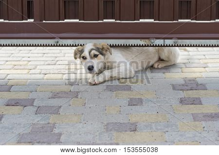 Outdoor alone - stray puppy is trying to crawl under garden gate for to get in to new home