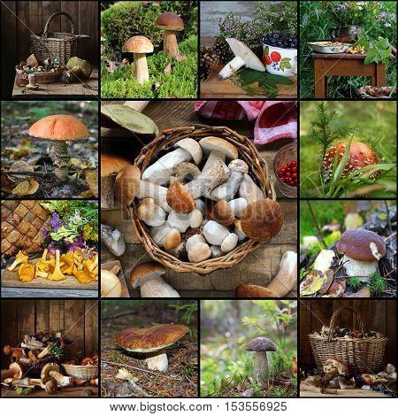 Collage from pictures with mushrooms: cepe boletus aspen mushroom mushroom chanterelle russula birch mushroom fly agaric.