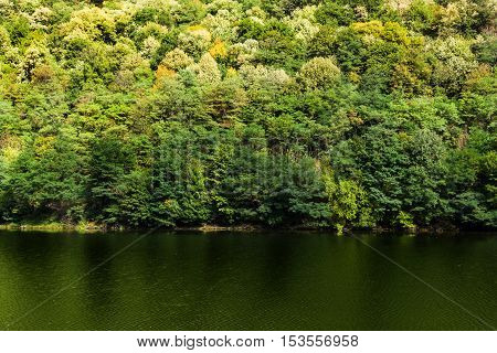 Autumn forest colors along Olt river in Romania