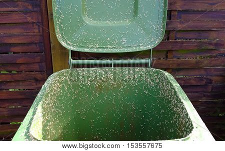 Creeping maggots from a green dustbin in Germany