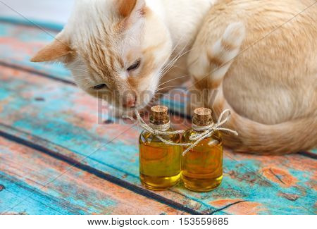 Light Red Cat And Olive Oil Small Bottles