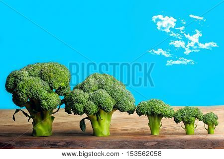 Broccolli Trees Food Art.sky With Clouds.concept Food Landscape
