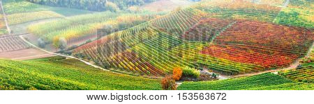 amazing vineyards in autumn colors .  Piemonte region, Italy