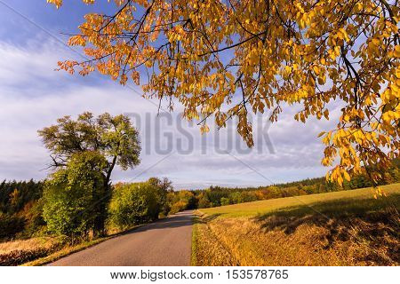 Straight road and yellow leaves of the tree. Colorful autumn and Moravian landscape Valchov.