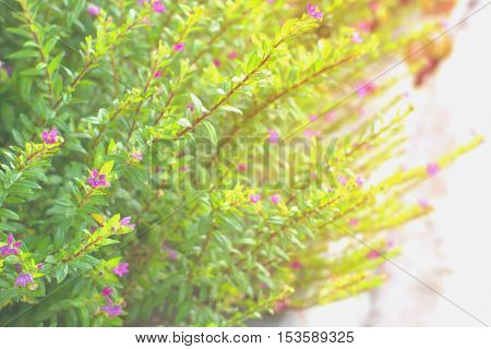 Colorful leaves of summer for abstract background.