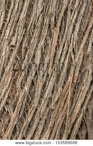 close up of bark background texture grooves