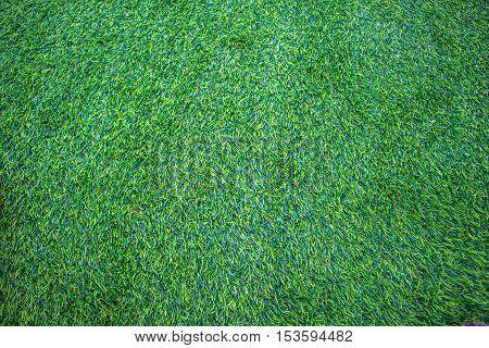 Green artificial grass. Pattern of green grass. Background of green grass.