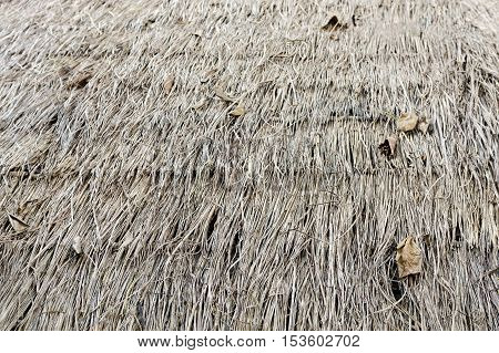 Thatch roof straw grass pattern or drired grass hatch roof on the top of traditional tribal house in northern part of Thailand