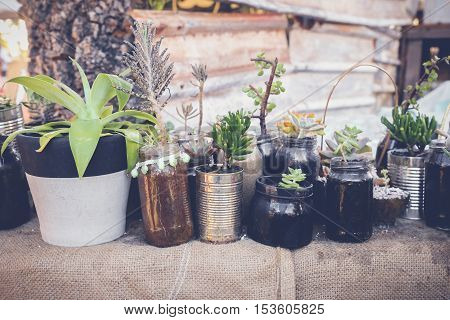 succulents in rustic reused jars and tins Eco and reuse concept