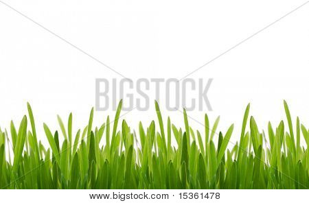 Fresh grass, isolated on white background