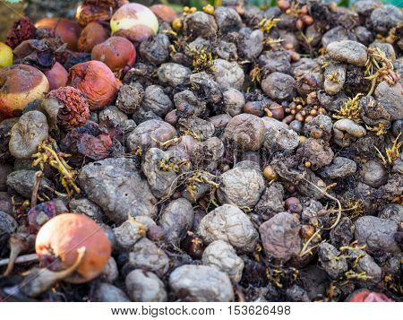 Photo of rotting fruit and vegetables close-up, decaying fruit macro view