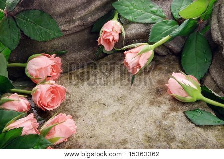 Pink roses composition on stones with waterdrops