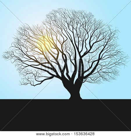 tree silhouette and noon. vector eps 10