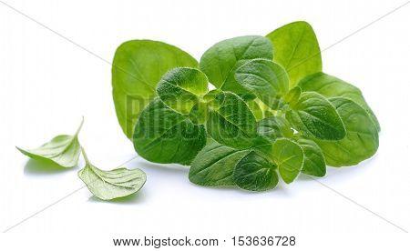 Oregano herbs closeup on white background .