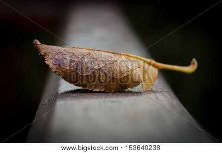 Fallen autumn leaf resting on balustrade - closeup.