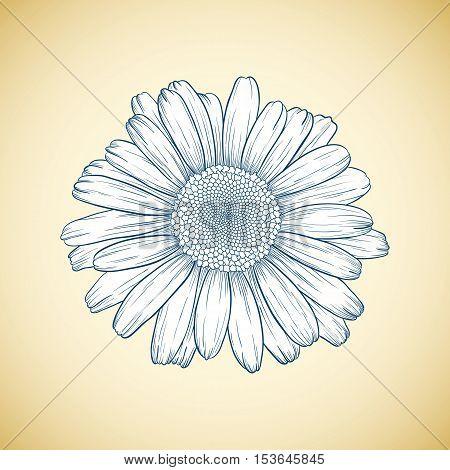 Vector Daisy Flower.