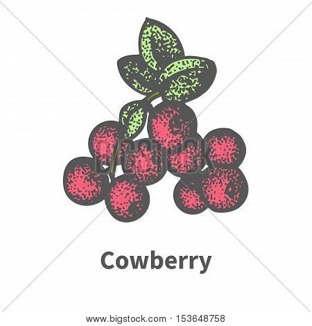 Vector illustration doodle sketch hand-drawn bunch of ripened red cowberry. Isolated on white background. The concept of harvesting. Vintage retro style. Ripe foxberry with leaves and branches.