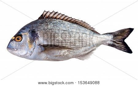 Dorada fish on white background. Studio shot