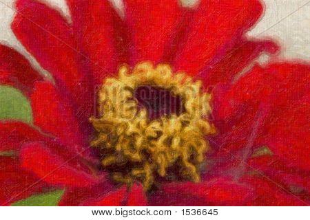Fine Art Photo Of Red Zinnia Flower
