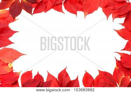 Red Autumn Leaves Frame Isolated On White Background