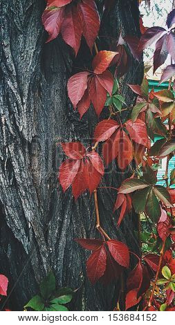 Processed with VSCO with hb2 preset, red leaves,  three