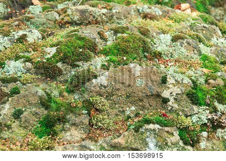 Moss on stone close up in forest