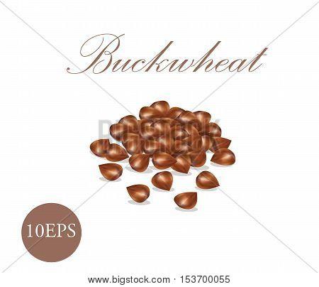 Buckwheat grain. Grain vector illustration. EPS10  Groats