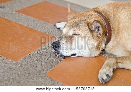 Dog Sad,dog Cry.