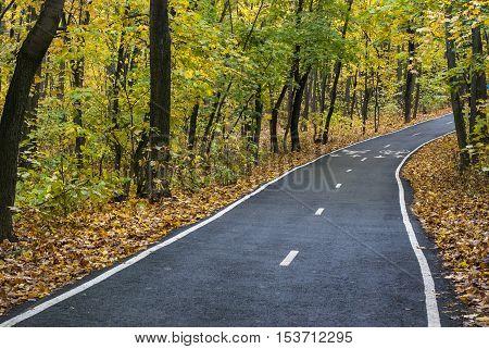 The asphalt racetrack in the autumn wood