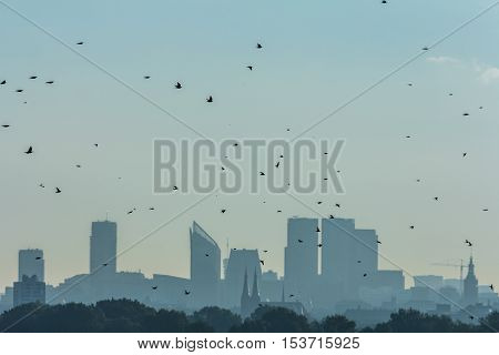 The Hague the Netherlands - October 16 2016: birds migrating past The Hague at sunrise